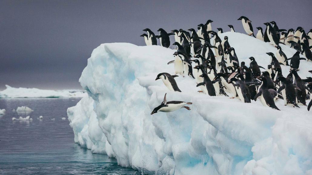 South Georgia and Falkland Islands (Malvinas)